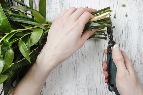 Cutting Flower Stems