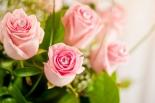 Vikiflowers order flowers online